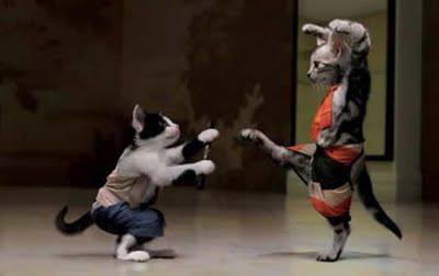 I want to know why they don't allow cats in the military.  I have some daring moves.  I can move quicker than a dog.   It's just not fair.  I bet with these moves,   I can put any military dog down.  Just watch me move.  I'm slicker than a rat on ice.  I'm not always nice.  I can be sneaky too,  I'm so quick.  I can pick a flea off a dog.  And he won't even feel it.  He won't even know what hit  Him  Come on, I can teach feline basic training.  I'm straining  My thigh here,  Are you there?  The cost of our uniforms would be cheaper.  I have sharp claws.  You won't hear my heavy paws.  I'm a cat that wants to serve our Country.  I know Cat Kung Fu.