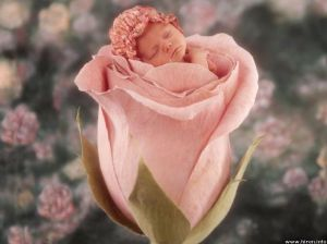 little-cute-baby-in-pink-rose